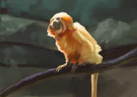 Lion Monkey by Irontree