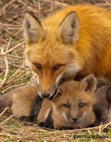 Mother and Kit Portrait by Les-Piccolo