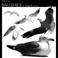 Photoshop Brushes - Seagulls by IsaaaHa