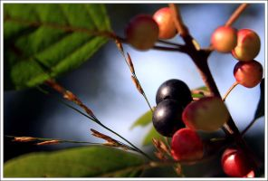 Berries by FlorentCourty