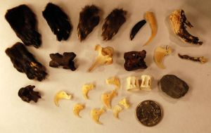 DESTASH Taxidermy Jewelry/Craft Supply Lot Charms by kittykat01
