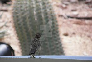 Kingdom of the Cactus Wren by Lugal