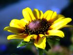 Yellow Flower by Habibahmadi