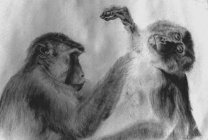 Malaysian macaques by Cosmic-Cherry-Tree