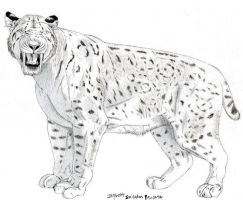 Smilodon populator drawing 2 by Jagroar
