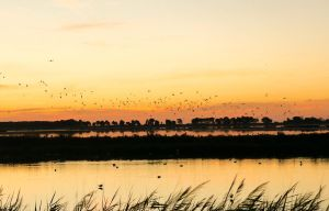 Sunrise in Camargue (it's time to go) by Mavricot