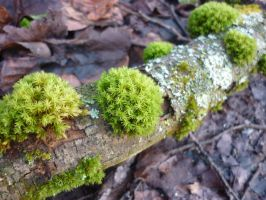 Mossy branch by lmsgblh