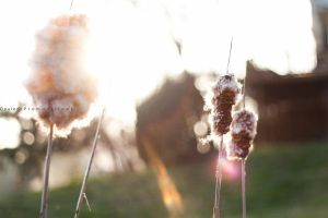 Sunny Cat Tails by LiiLiiFish