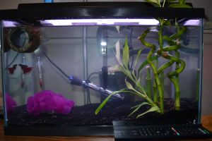 Another Ideal Betta Setup by NotoriousBunny