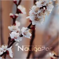 cool little flowers by NaViGa7or