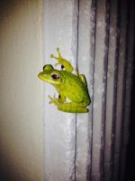 Frog on a Wall by Rockonbrad