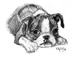Boston Terrier Puppy by NiteWolf-X