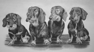 Four dogs by Maberg