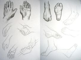hands and feet study by alextso