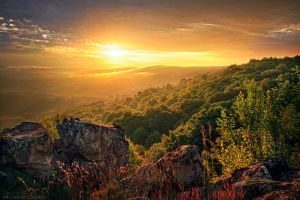 Golden Dream by FlorentCourty