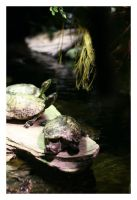 Terrapins by bwaa