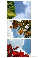 Caribbean Collage by Sonik-Sheep
