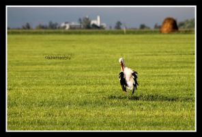 Stork is drying by declaudi