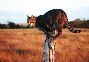 Watch Tower by Nyla-Cat
