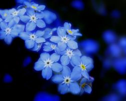 Forget Me Not II by Callu