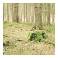 .: trunk :. by all17