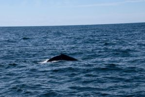 Whale Back, Up Close 2 by Miss-Tbones