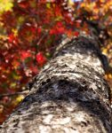 Fall Tree by hollybolly95