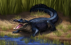 American Alligator by Nachiii