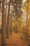 Follow me to woods by ShinyphotoArt