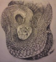 Black Mamba in pencil by VisualSymphonyStudio
