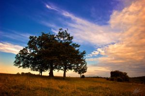 Farthing Downs Sunset 3 by andy1349