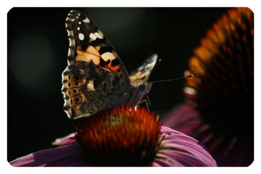 Butterfly by MoIss
