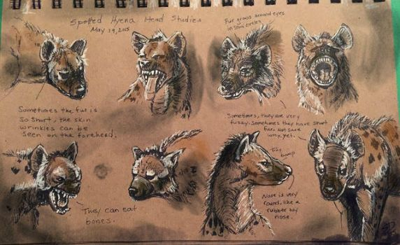 Hyena 2 Watercolor Test by Waterbear