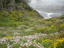 Field of Flowers by the Sea by katgirl28
