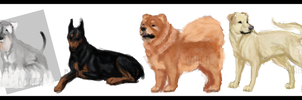 Canine studies no.2 by Baheti