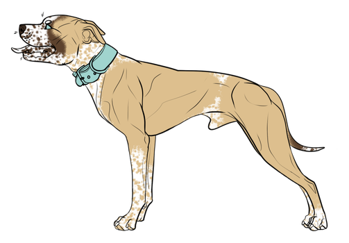 Pitbull Puppy Adoptable 01 by CascadiaRiverKennels