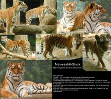 Tiger Stock by Melyssah6-Stock