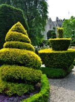 Levens Hall 141 by Forestina-Fotos