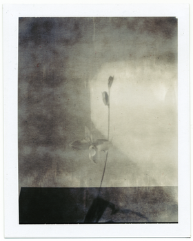 ghost orchid by pinhole-photography