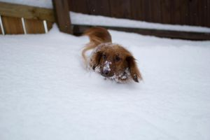 snow weiner.. by pringle753