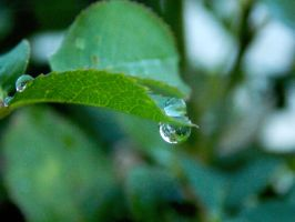 Water droplets by TheRafflesia