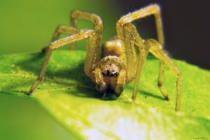 Super Macro of a Shop Spider by dannypyle