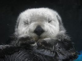 Otterly exhausted by Canislupuscorax