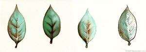 Leaves by Kintall