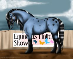 Ethans Show Picture For the Halter Show by HotrodsImpulse