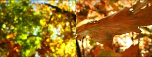 Autumn leaves by Justynka