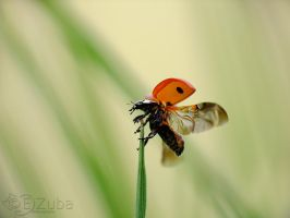 lady beetle by efeline