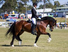 STOCK - Gold Coast Show 348 by fillyrox