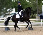 Black Warmblood Gelding by diamonte-stock