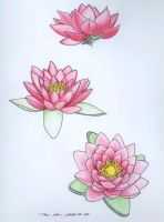 Water Lily studies by Milanthis